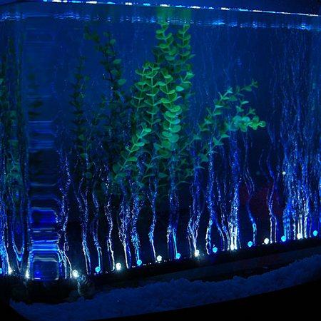 Подсветка для аквариума светодиодная
