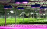 Обзор вариантов освещения для растений