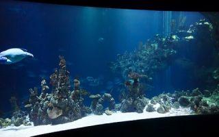 Как выбрать светодиодный светильник для вашего аквариума