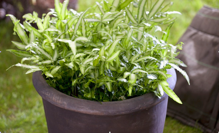 Зеленое кустистое растение в горшке