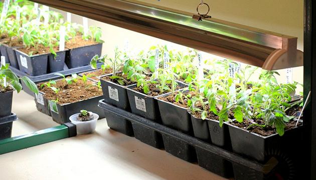 Освещение растений люминесцентным светом