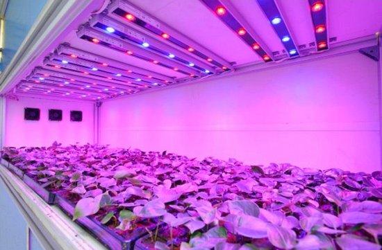 Светодиодное освещение растений
