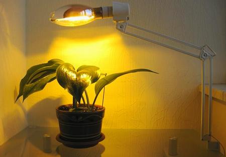 Освещение растения натриевой лампой