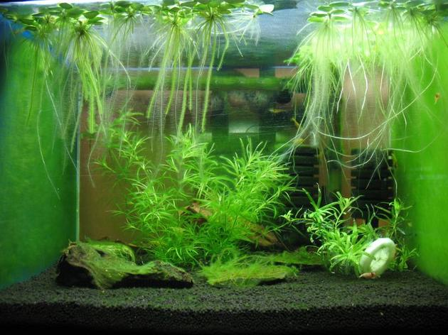 03-akvarium