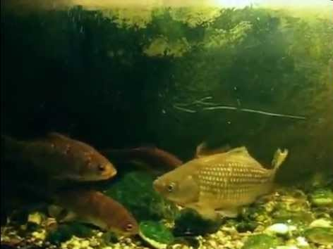 05-ryby