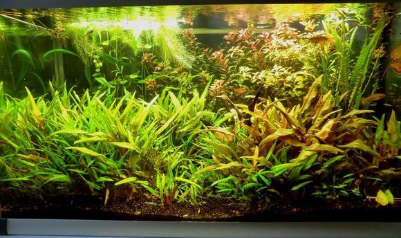 08-akvarium