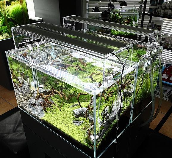 09-akvariumy