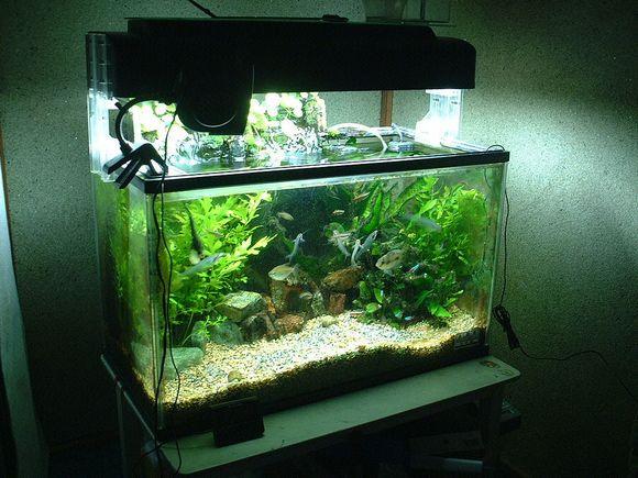10-akvarium