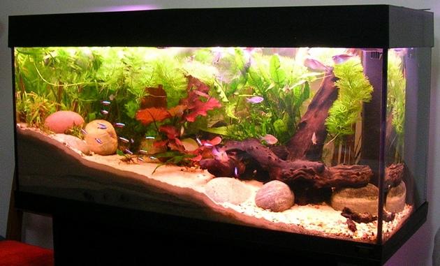 12-akvarium