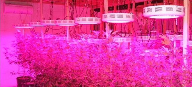Светодиодные фитолампы для растений как выбрать
